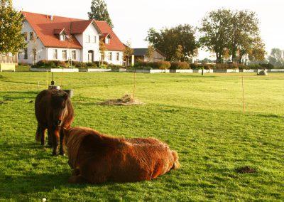 LandWert Schulbauernhof Ponys